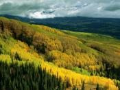 Aspen Forest in Early Fall Ohio Pass Gunnison National Forest Colorado 1600 x 1200