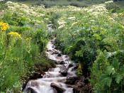 Wildflowers Border a Mountain Stream White River National Forest Colorado 1600 x 1200